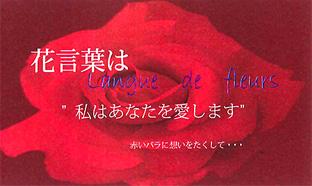 花言葉(red)