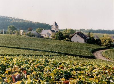 Vrigny & Arlaux Vineyard