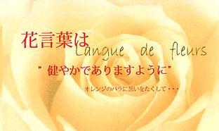 花言葉(orange)