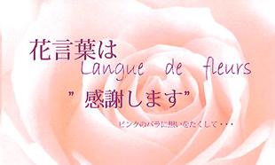 花言葉(pink)